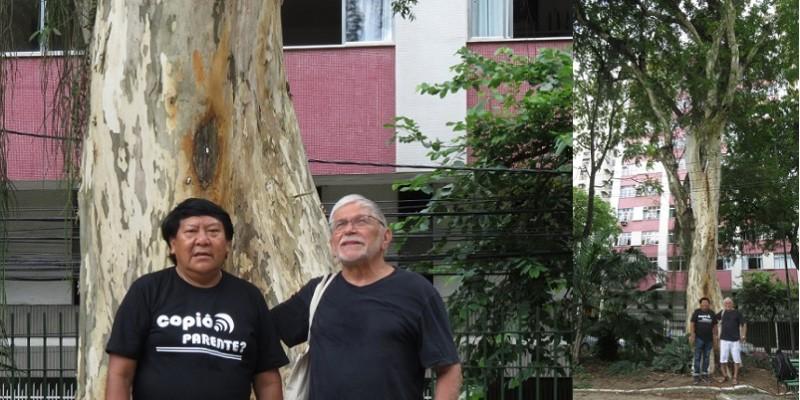 Davi Kopenawa: a árvore que não envelhece